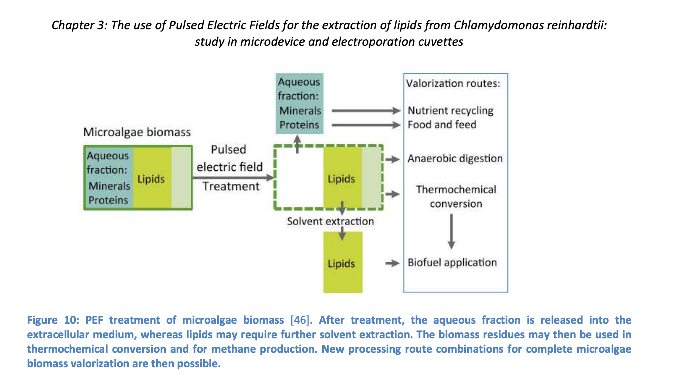 pulsed-electric-field for extraction of lipids from Chlamydomonas reinhardtii